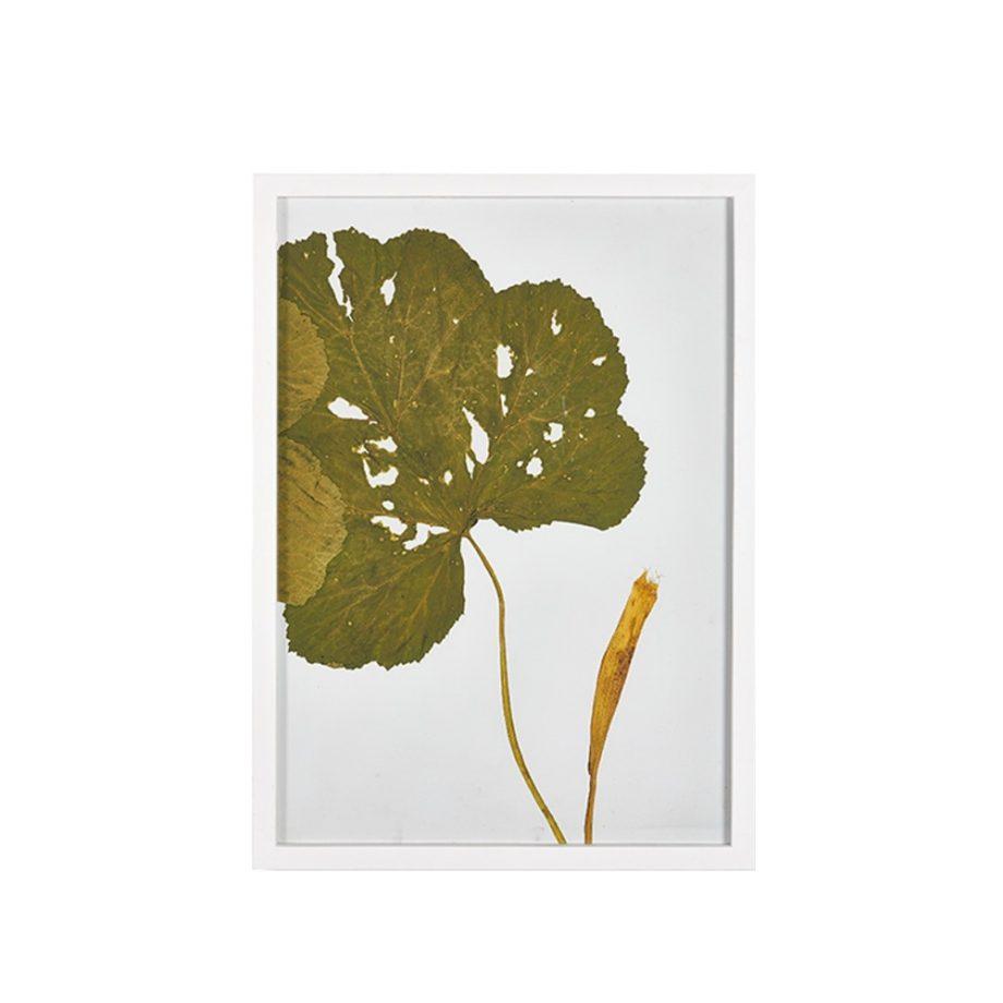 botanical leaf print in white frame