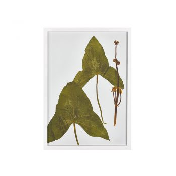 botanical leaf print in white frame