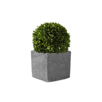 faux boxwood ball in cement planter